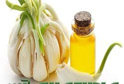 فروش عمده طعم دهنده طبیعی سیر