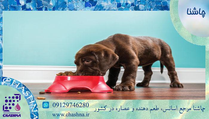 قیمت فروش عمده طعم دهنده غذای حیوانات خانگی
